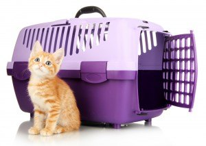 chat-voyage-cage