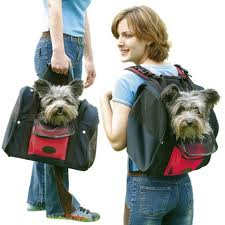 sac-a-dos-transport-chien-chat