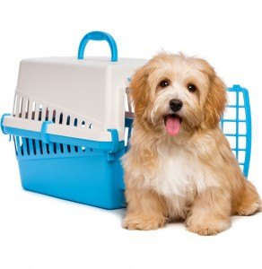 valise-animal-chien