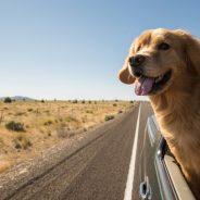 Conseils et astuces pour partir en vacances avec son animal de compagnie